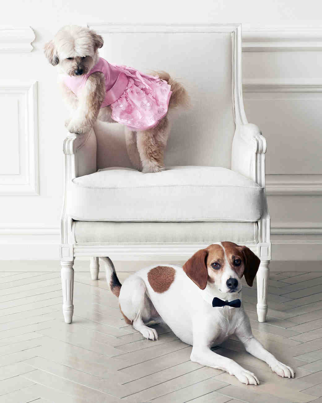 wedding-pet-clothes-dog-on-chair-082-d111997-0515.jpg
