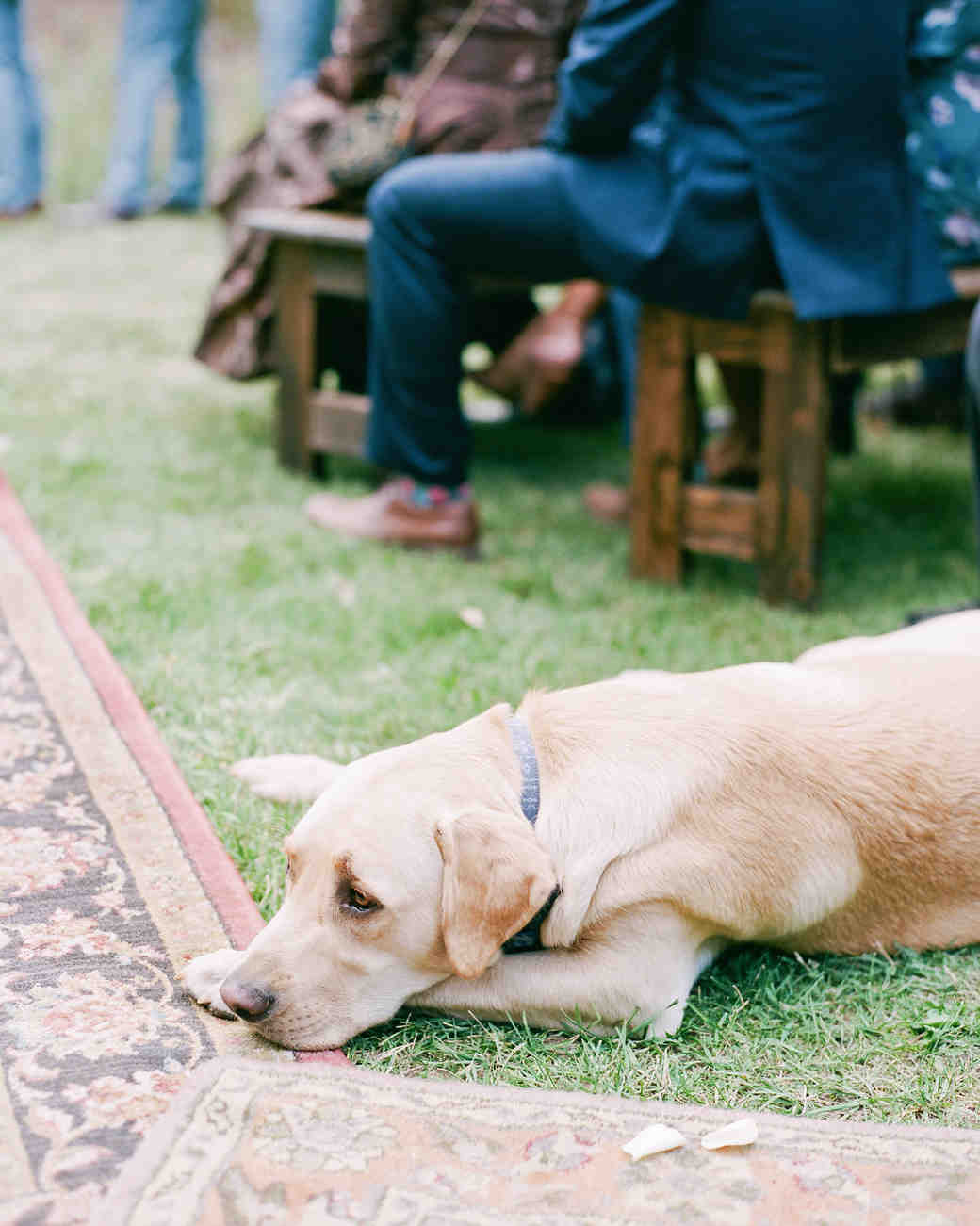 margaux patrick wedding ceremony dog