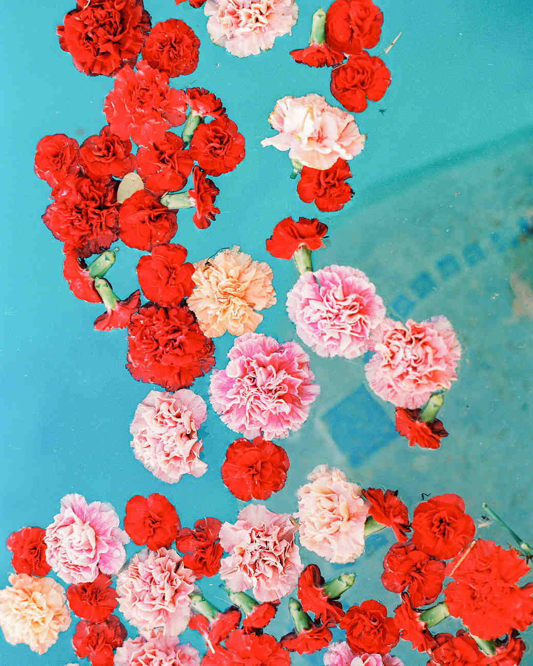 20 Elevated Ways to Use Carnations Throughout Your Entire Wedding ...