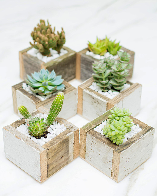 The Desert Box Succulent Subscription