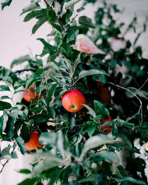 apple wedding ideas love by serena