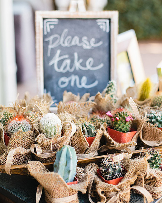 destination wedding favors potted cactus
