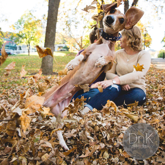 dog-engagement-photobomb-1015.jpg