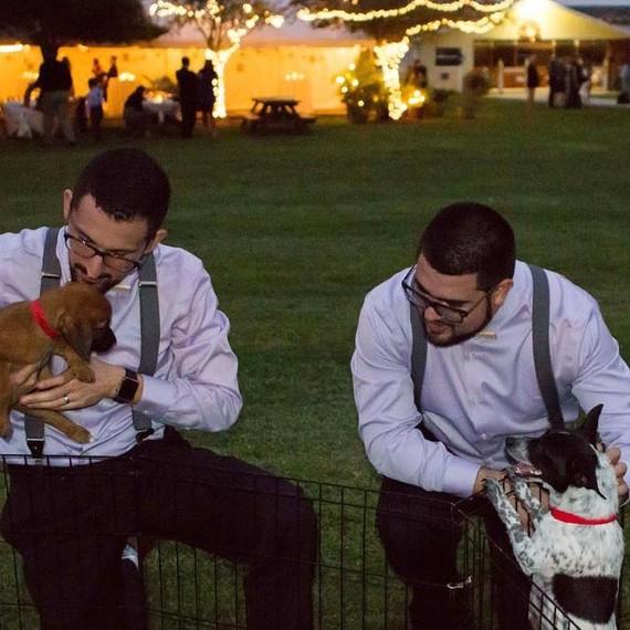 puppy-snuggles-groomsmen-0216.jpg