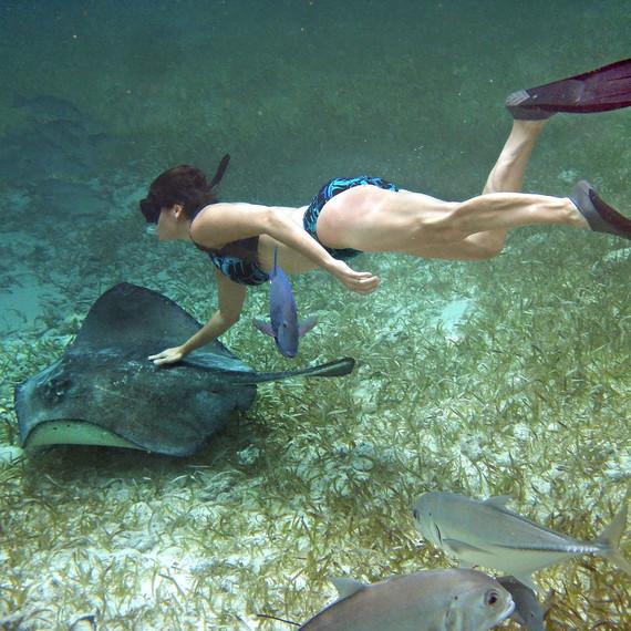 belize swim with stingrays swimming animals honeymoon
