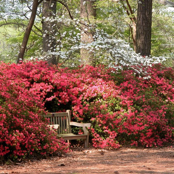 norfolk-botanical-garden-bench-0215