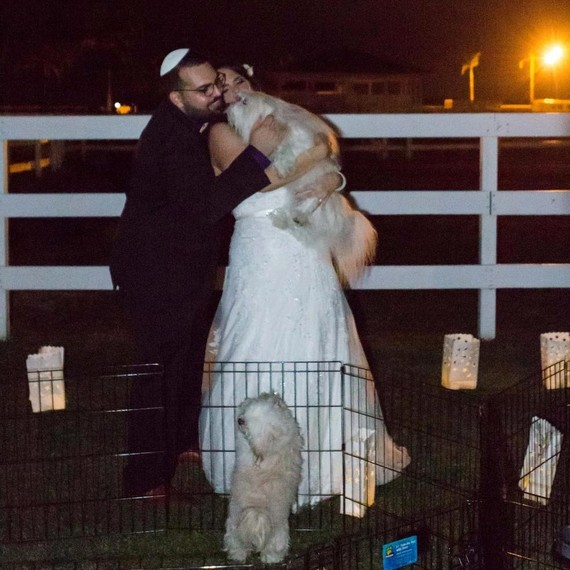 puppy-snuggles-bride-and-groom-0216.jpg