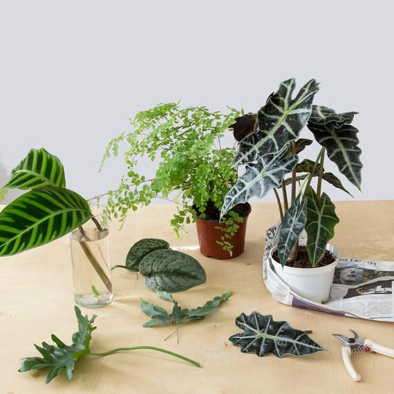 Plants for DIY Foliage Arrangement