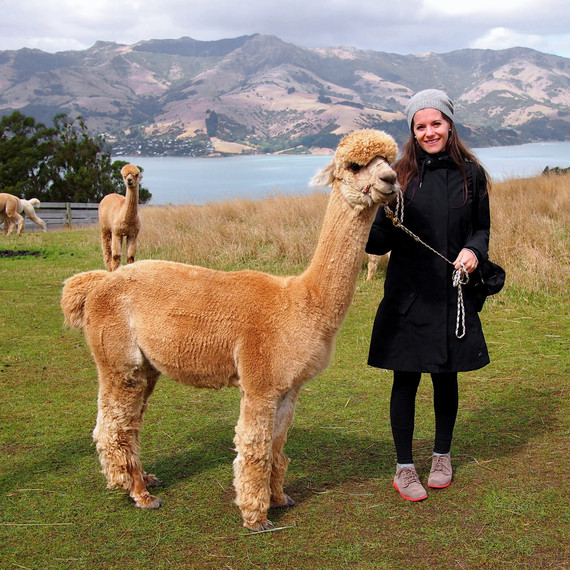 travel-blogger-qa-alpaca-farm-new-zealand-1115.jpg