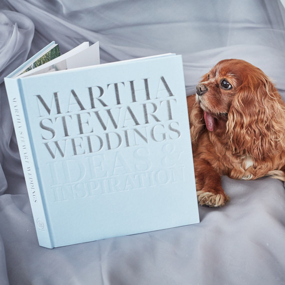 toast-dog-wedding-dress-fitting-reading-msw-book-0116.jpg