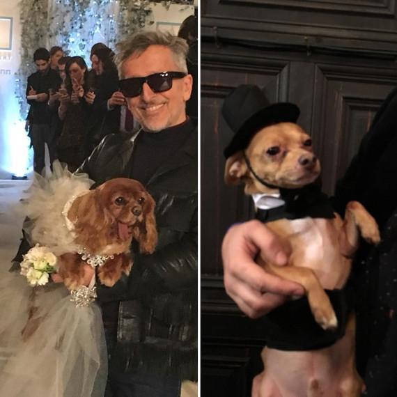 darcy-diary-dog-wedding-bride-and-groom-split-image-0116.jpg